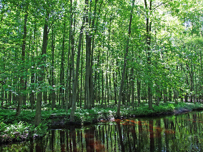 sanilac floodplain forest